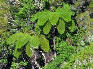 Un exemple de forêt primaire à Bélouve