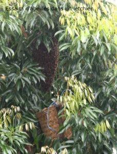 essaim d'abeille par la Villa Romeo