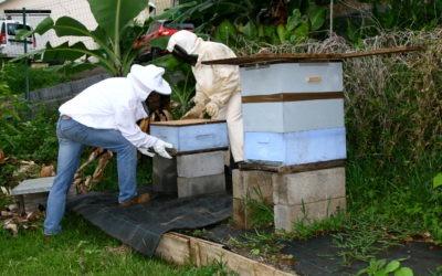Essaim d'abeille