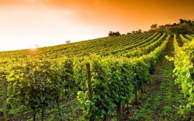 Tour de France des vins d'agriculture raisonnée et bio