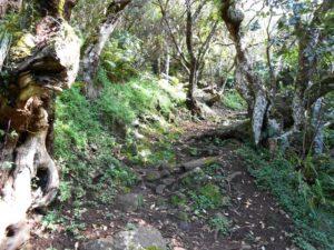 Forêt Les Makes